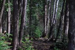 Datering van hout